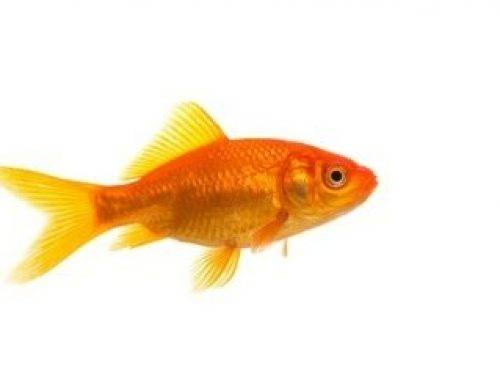 How do I know if I'm a poker fish?